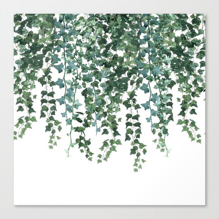 Ivy Vine Drop Canvas Print