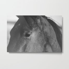Horse Photograph in Black and White Metal Print