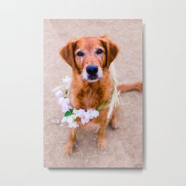 Goldie Locks, Golden Retriever with Flower Crown Metal Print