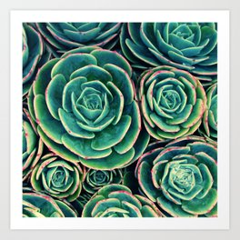Rosettes in Green Art Print