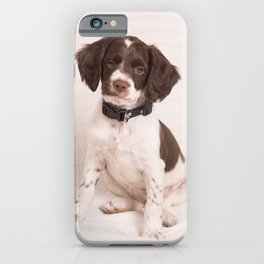 Brittany Puppy Sitting iPhone Case