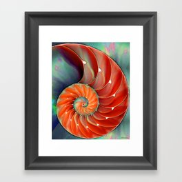 Nautilus Shell - Nature's Perfection by Sharon Cummings Framed Art Print