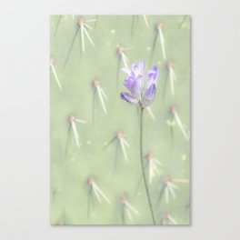 """Desert Wildflower"" Canvas Print"