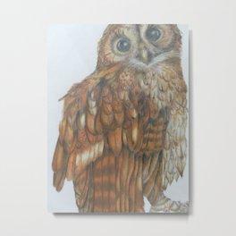 Tawny owl. Metal Print