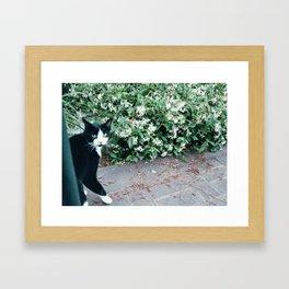 Jackson Framed Art Print