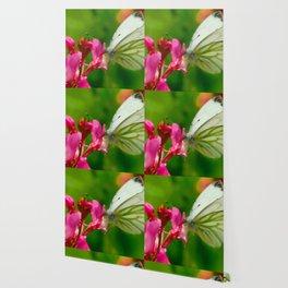 Butterfly's inn ... Wallpaper