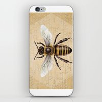bee iPhone & iPod Skins featuring Bee by Paper Skull Studios