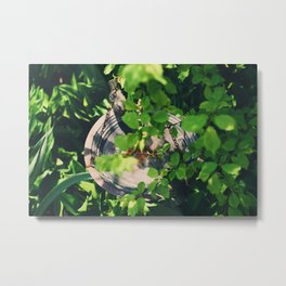 Hiding the the branches Metal Print