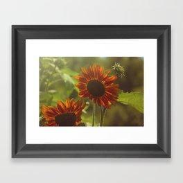 Red Sunflower II Framed Art Print
