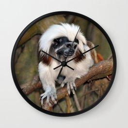 Cotton-top Tamarin Wall Clock