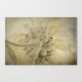Texture Sunflower Canvas Print