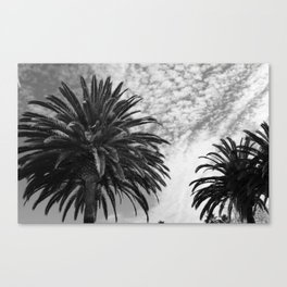 Black and White Palms  Canvas Print