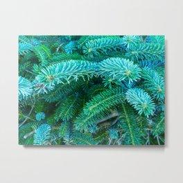 Fantastic Blue Spruce Metal Print