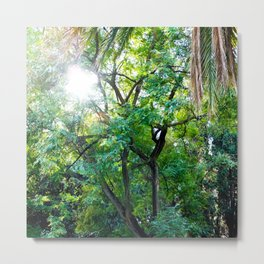 The enchanted woods | Bright tropical forest palm tree exotic green photography Metal Print