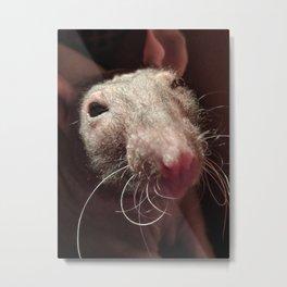 Dobby the rat Metal Print