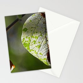 # 356 Stationery Cards