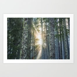 Filtered Light Art Print