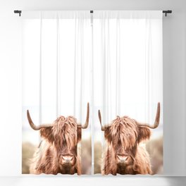 Highland Cow in a Field Southern Blackout Curtain