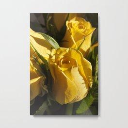 Morning sun on Rose Metal Print