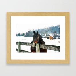 Thoughtful Horse Framed Art Print