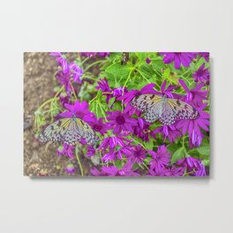 2 Tree Nymph Butterflies Metal Print