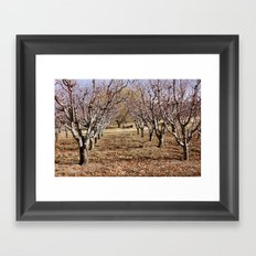In the Orchard Framed Art Print