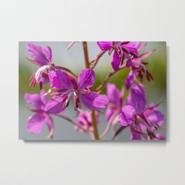 Flower By The River Metal Print