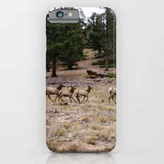 Colorado, wildlife iPhone 6s Slim Case