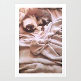 SoftMaci Art Print
