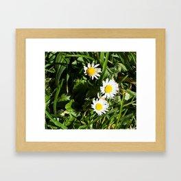 Spring Daisy Photography Print Framed Art Print