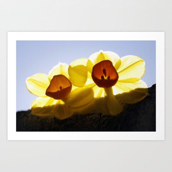 Mini Daffodils 2 Art Print