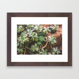 Botanical Gardens - Succulent #882 Framed Art Print