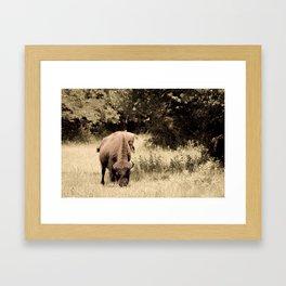 Bison Roaming the Great Plains Framed Art Print