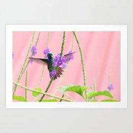 Hummingbird Flight Art Print