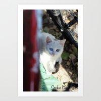 Curious Kitty Art Print