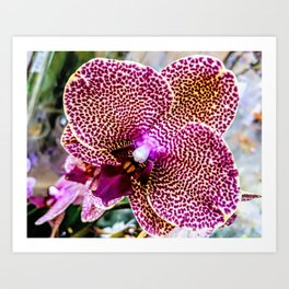 Vibrant Orchids Art Print