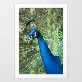 Show your colours Art Print