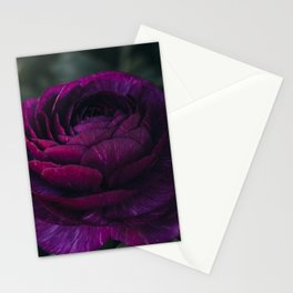 Purple Ranunculus Stationery Cards