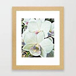 Orchid nature photography design art gift Framed Art Print
