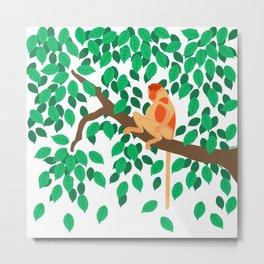 Proboscis monkey Metal Print