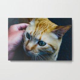 Cat in Kyoto Metal Print