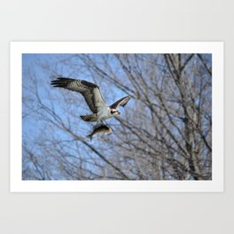 Osprey and Prey - Wildlife Photography Art Print