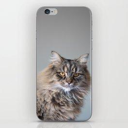 Royal Tom cat : Look into my eyes iPhone Skin