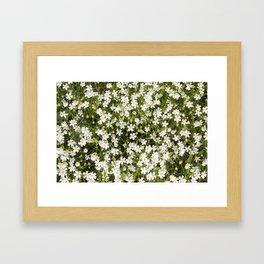 Stitchwort Stellaria Wild Flowers Framed Art Print