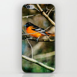 Oriole ~ Ginkelmier Inspired iPhone Skin