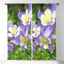 Watercolor Flower, Columbine 05, Fall River Road, RMNP, Colorado Blackout Curtain