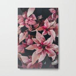 Pink Poinsettia Metal Print