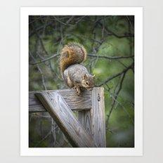 Fox Squirrel on a fence Art Print