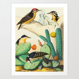 Monograph of the Picides Alfred Malherbe 1861 Vintage Bird Cactus Flower Illustration Art Print
