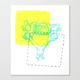 4th Cervical Vertebra Canvas Print